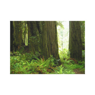 Redwood Trees Forest Canvas Print