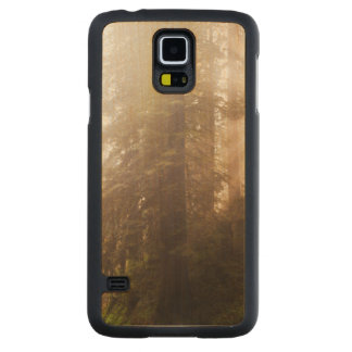 Redwood Trees in Morning Fog with Sunrays Carved Maple Galaxy S5 Case