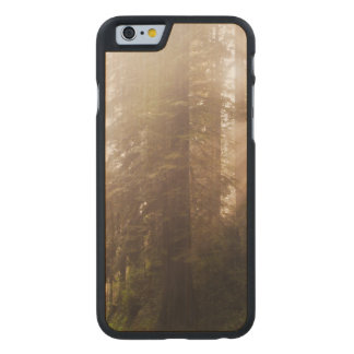 Redwood Trees in Morning Fog with Sunrays Carved Maple iPhone 6 Case