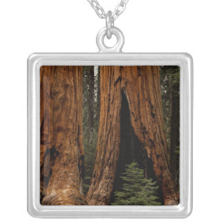 Redwood Trees, Sequoia National Park. Personalized Necklace