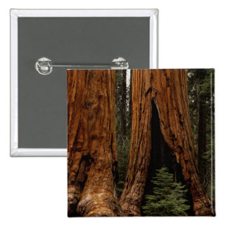 Redwood Trees Sequoia National Park Pinback Button