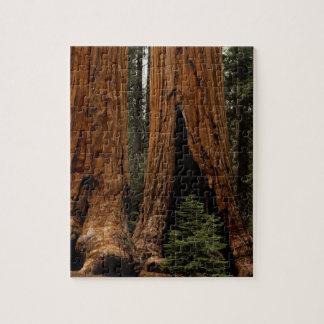 Redwood Trees, Sequoia National Park. Puzzles