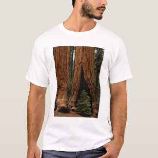 Redwood Trees, Sequoia National Park. T-Shirt
