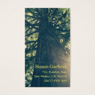 Redwood with Sunbeams Business Cards