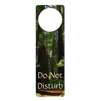 Redwoods and Ferns at Redwood National Park Door Hangers