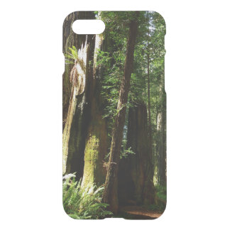 Redwoods and Ferns at Redwood National Park iPhone 8/7 Case