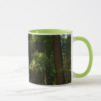 Redwoods and Ferns at Redwood National Park Mug