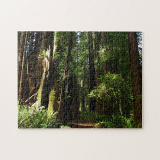 Redwoods and Ferns at Redwood National Park Puzzle