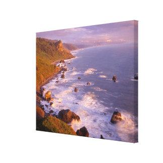 Redwoods coastline, California Canvas Print