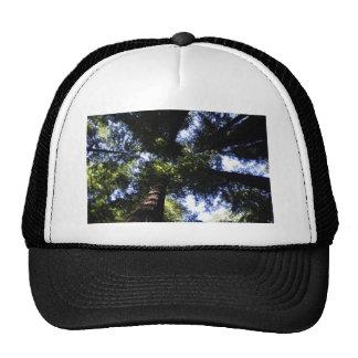 Redwoods Trucker Hats