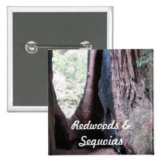 Redwoods Sequoias Button