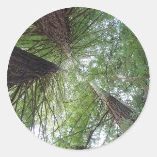 Redwoods Sticker
