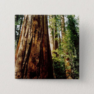Redwoods- Yosemite 15 Cm Square Badge