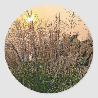 Reed At Sunset Classic Round Sticker