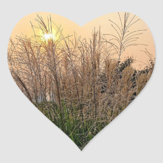 Reed At Sunset Heart Sticker