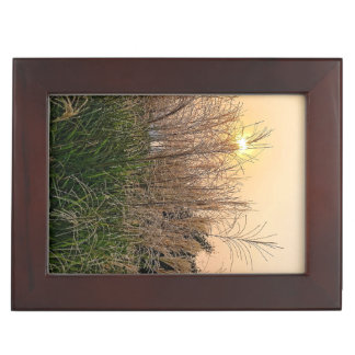 Reed At Sunset Keepsake Box