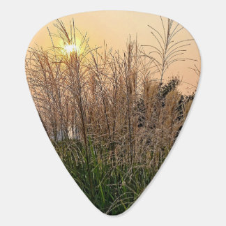 Reed At Sunset Plectrum
