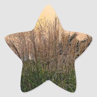 Reed At Sunset Star Sticker