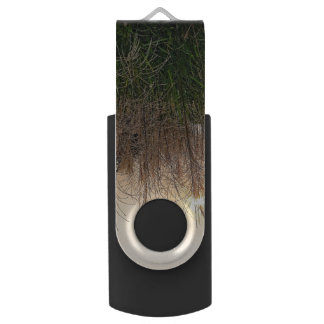 Reed At Sunset USB Flash Drive