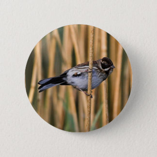 Reed Bunting Button Badge