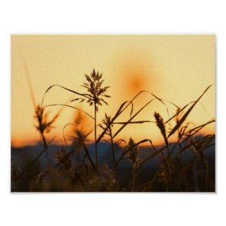 Reeds at sunset light poster. poster