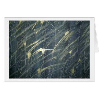 Reeds Of Grass Card