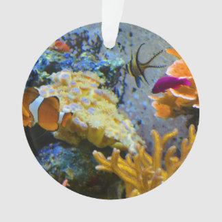 reef fish coral ocean