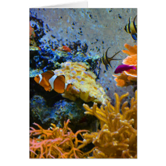 reef fish coral ocean card