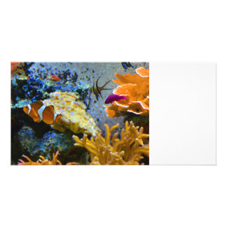 reef fish coral ocean customized photo card