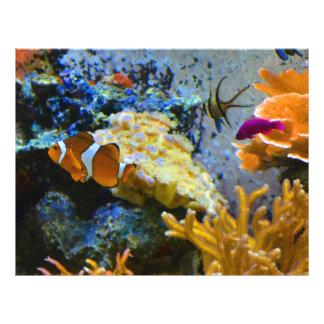 reef fish coral ocean flyer
