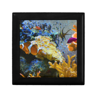 reef fish coral ocean gift box