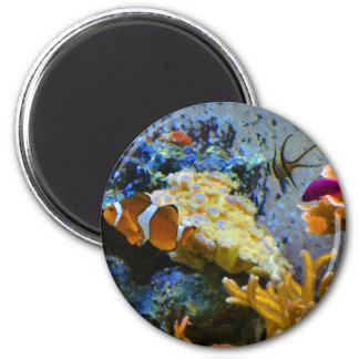 reef fish coral ocean magnet