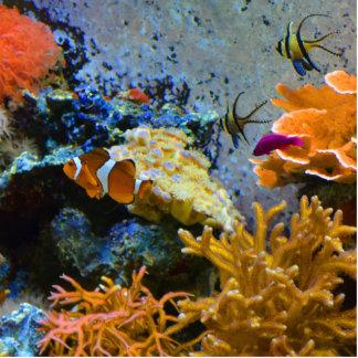 reef fish coral ocean standing photo sculpture