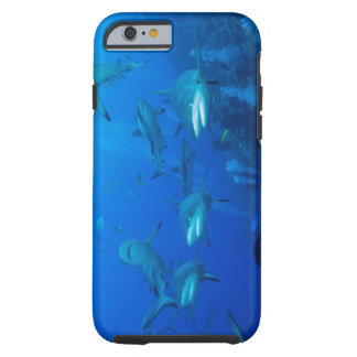 Reef Shark iPhone 6 case Tough iPhone 6 Case