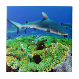 Reef Shark Photos Ceramic Tile
