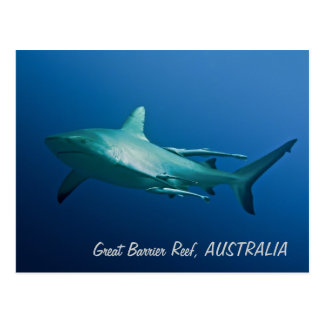 Reef Shark Postcard