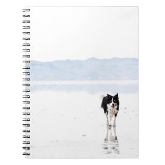 Reflected border collie spiral notebook