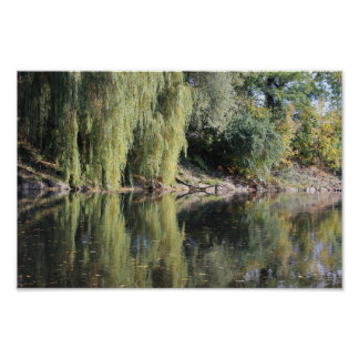 Reflected Willow Trees In River Poster