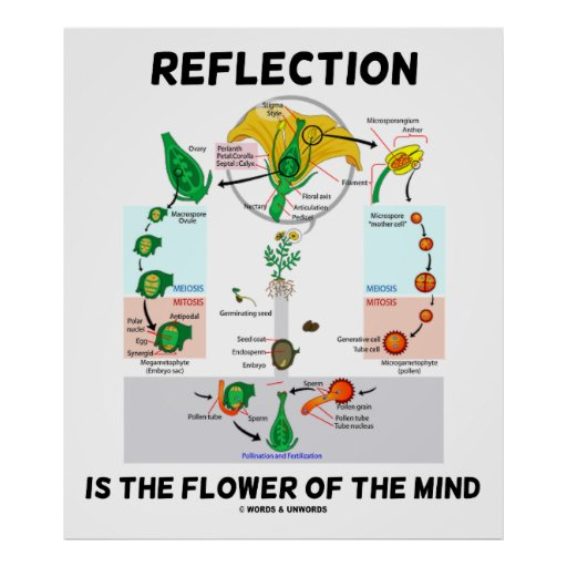 reflection of five minds for the Read chapter 4 how children learn: first released in the spring of 1999, how people learn has been expanded to show how the theories and insights from the login register cart help how people learn: brain, mind, experience, and school: expanded edition (2000.