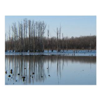 Reflection Postcard