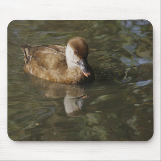 Reflections of a Ducl Mouse Pad