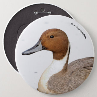 Reflections of a Northern Pintail Duck 6 Cm Round Badge