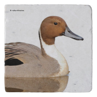 Reflections of a Northern Pintail Duck Trivet