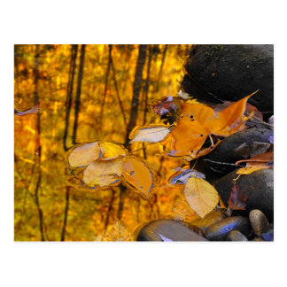 Reflections of Autumn Gold Postcard
