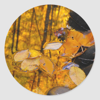 Reflections of Autumn Gold Round Sticker