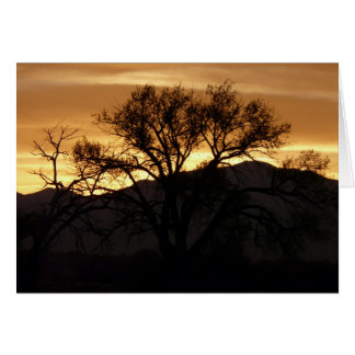 Reflections On A Tree - blank Card
