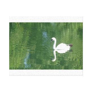 Reflective Swan Canvas