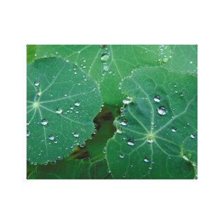 Refreshing Rain Drops Canvas Print