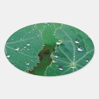 Refreshing Rain Drops Oval Sticker