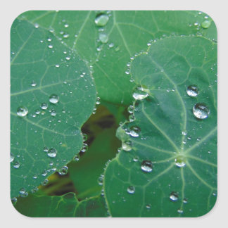 Refreshing Rain Drops Square Sticker